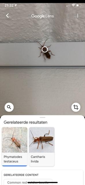 Google Lens vertelde dat dit een Geel Soldaatje of een Veranderlijke Boktor is.